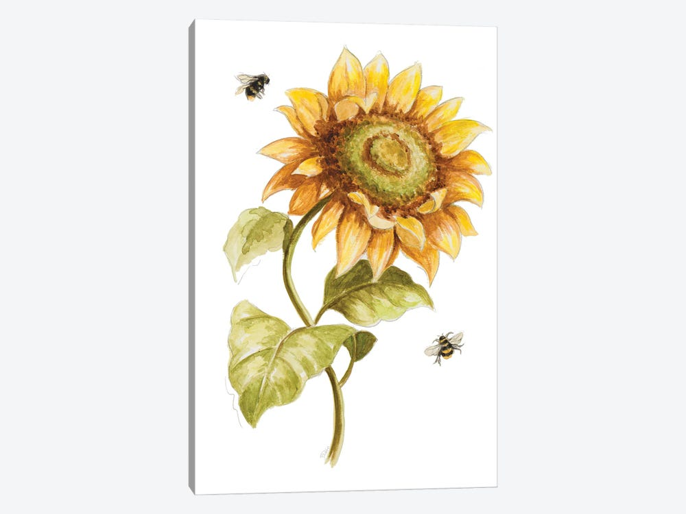 Harvest Gold Sunflower II by Patricia Pinto 1-piece Art Print
