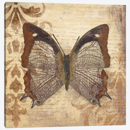 Butterfly Canvas Print #PPI81} by Patricia Pinto Canvas Art Print