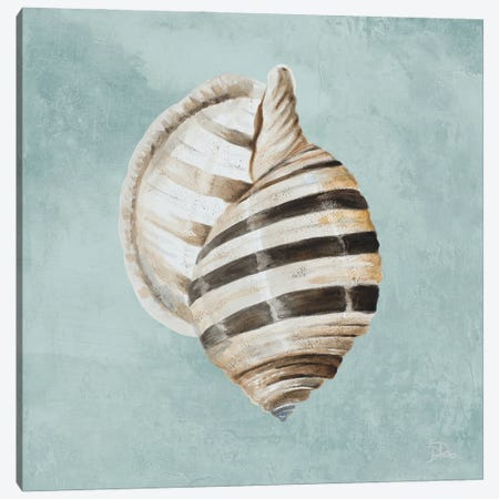 Modern Shell on Teal I Canvas Print #PPI853} by Patricia Pinto Canvas Print