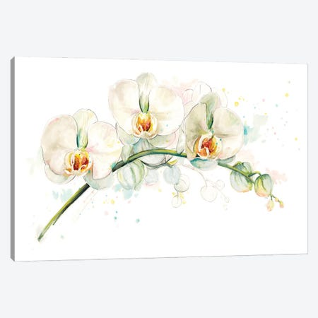 White Orchids Canvas Print #PPI932} by Patricia Pinto Canvas Artwork