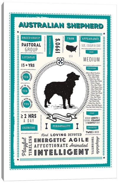 Australian Shepherd Infographic Blue Canvas Art Print