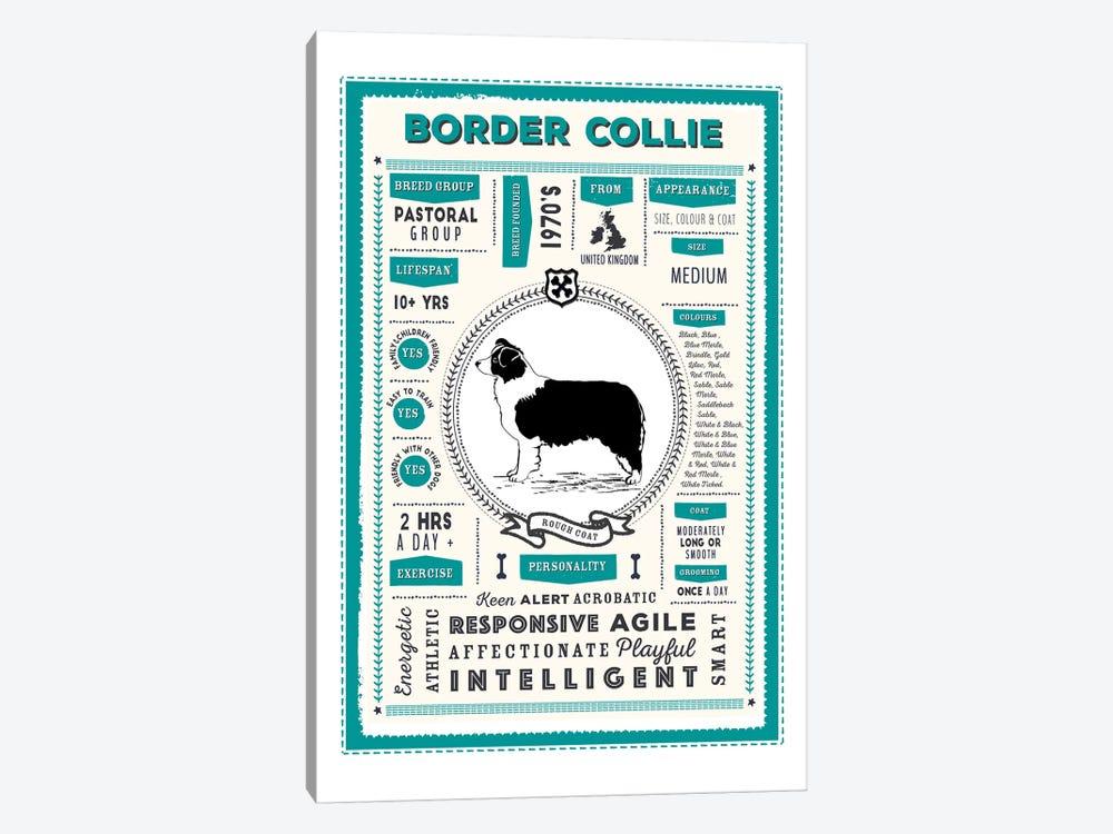 Border Collie - Rough Coat Infographic Blue by PaperPaintPixels 1-piece Canvas Print