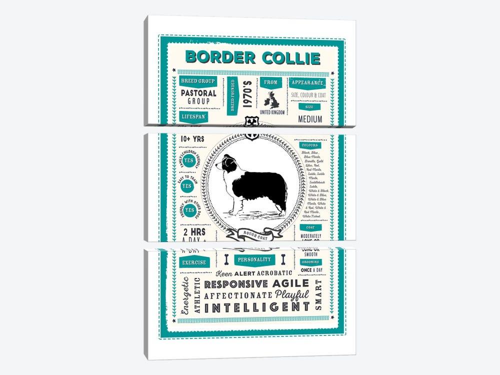 Border Collie - Rough Coat Infographic Blue by PaperPaintPixels 3-piece Canvas Print