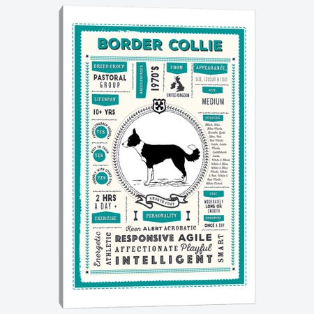 Border Collie - Smooth Coat Infographic Blue Canvas Print #PPX192} by PaperPaintPixels Canvas Artwork
