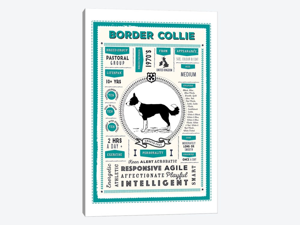 Border Collie - Smooth Coat Infographic Blue by PaperPaintPixels 1-piece Art Print