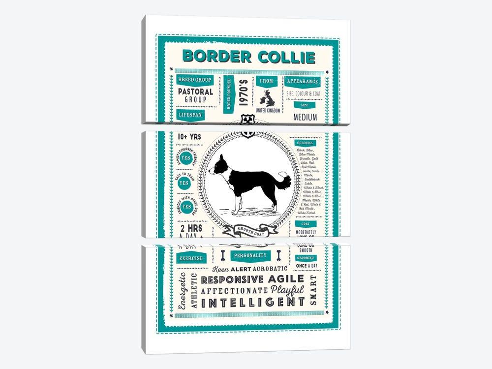 Border Collie - Smooth Coat Infographic Blue by PaperPaintPixels 3-piece Canvas Art Print