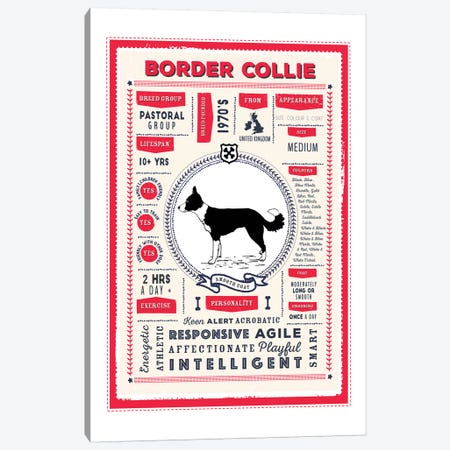 Border Collie - Smooth Coat Infographic Red Canvas Print #PPX193} by PaperPaintPixels Canvas Wall Art