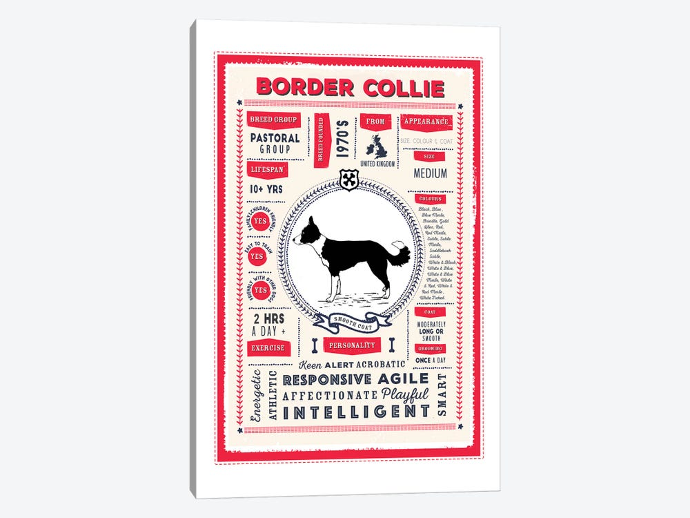 Border Collie - Smooth Coat Infographic Red by PaperPaintPixels 1-piece Canvas Artwork