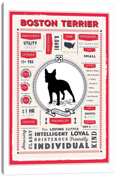 Boston Terrier Infographic Red Canvas Art Print