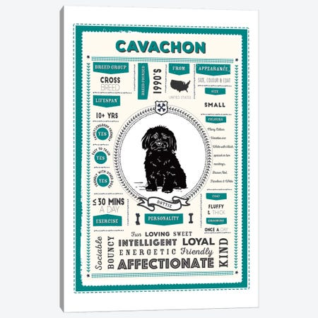 Cavachon Infographic Blue Canvas Print #PPX202} by PaperPaintPixels Canvas Artwork