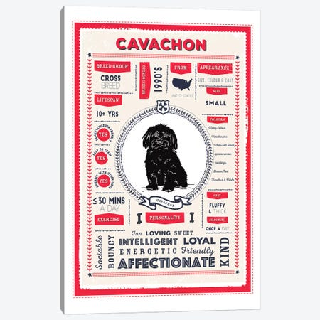 Cavachon Infographic Red Canvas Print #PPX203} by PaperPaintPixels Canvas Wall Art