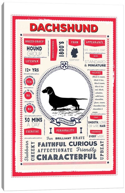 Dachshund Infographic Red Canvas Art Print