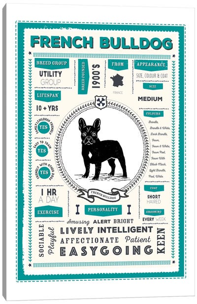 French Bulldog Infographic Blue Canvas Art Print