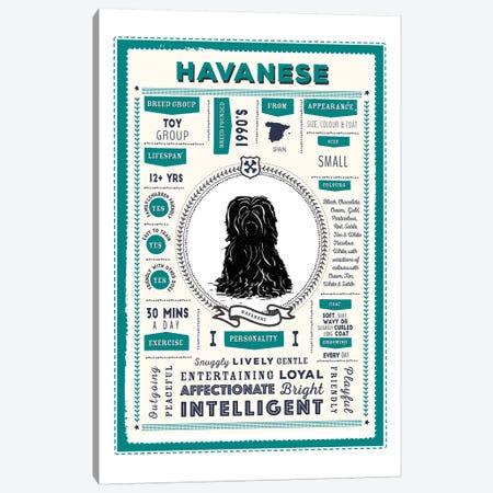 Havanese Infographic Blue Canvas Print #PPX231} by PaperPaintPixels Art Print