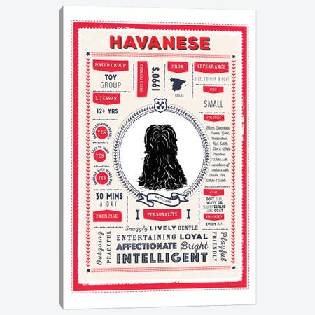 Havanese Infographic Red Canvas Print #PPX232} by PaperPaintPixels Canvas Print