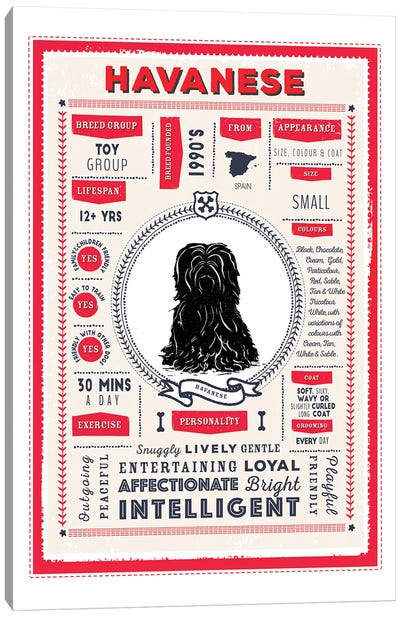 Havanese Infographic Red Canvas Art Print