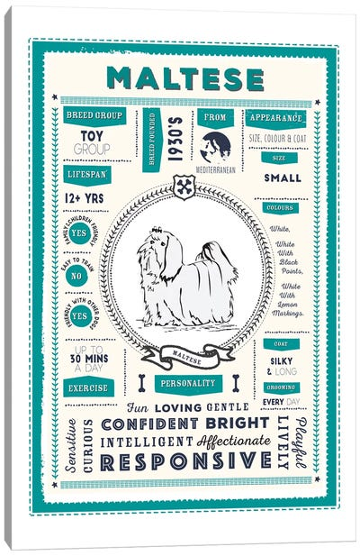 Maltese Infographic Blue Canvas Art Print