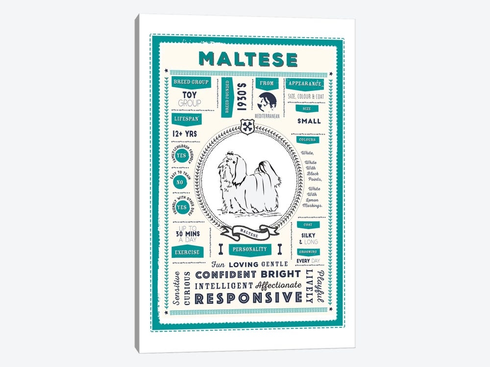 Maltese Infographic Blue by PaperPaintPixels 1-piece Canvas Wall Art
