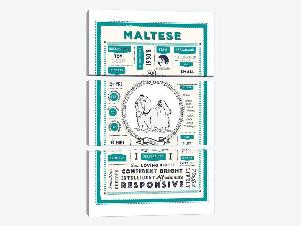 Maltese Infographic Blue by PaperPaintPixels 3-piece Canvas Wall Art