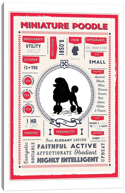 Miniature Poodle Infographic Red Canvas Art Print