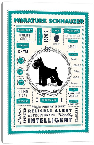 Miniature Schnauzer Infographic Blue Canvas Art Print