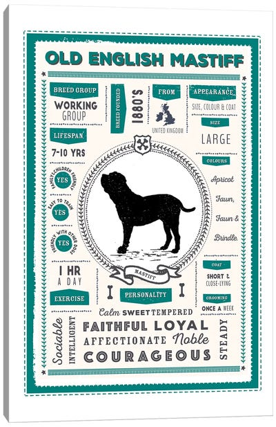 Old English Mastiff Infographic Blue Canvas Art Print