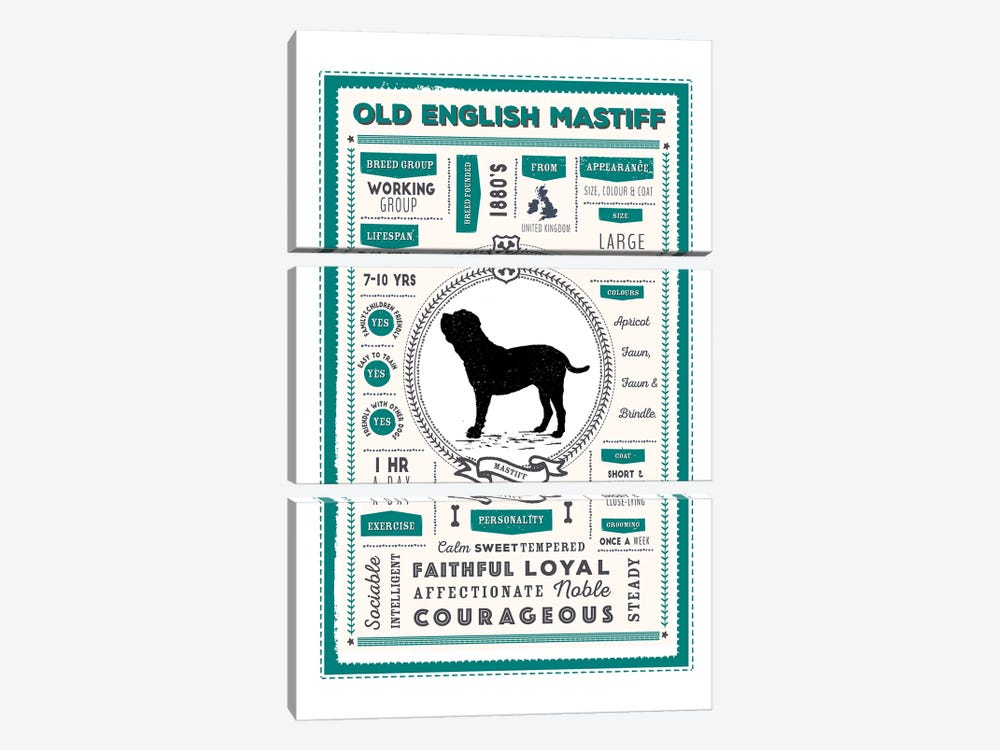 Old English Mastiff Infographic Blue by PaperPaintPixels 3-piece Canvas Art