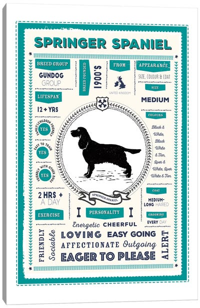 Springer Spaniel Infographic Blue Canvas Art Print
