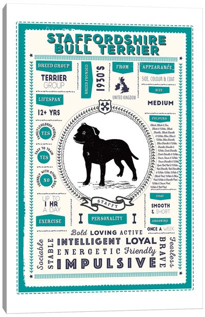 Staffordshire Bull Terrier Infographic Blue Canvas Art Print