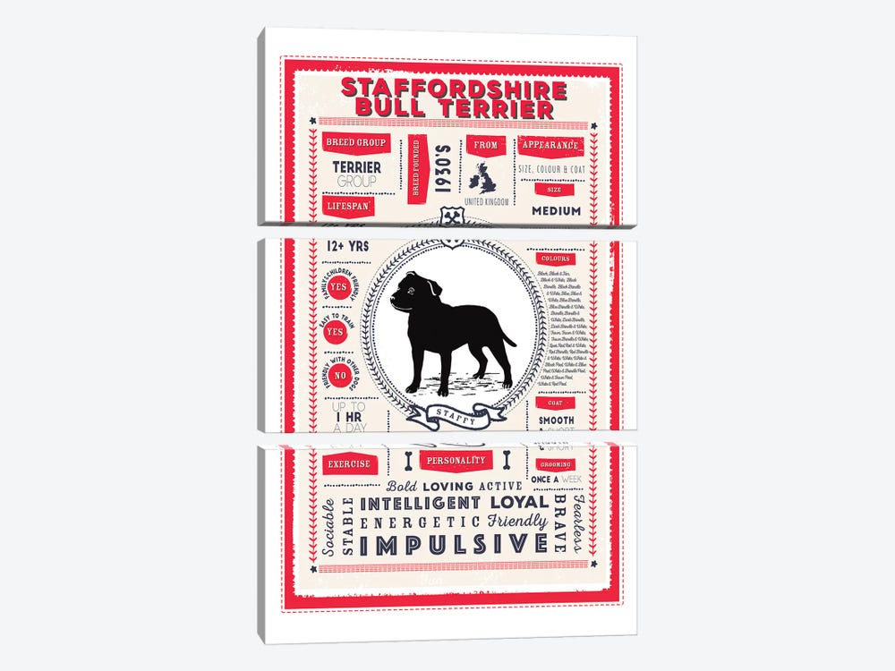 Staffordshire Bull Terrier Infographic Red by PaperPaintPixels 3-piece Canvas Artwork