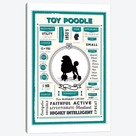 Toy Poodle Infographic Canvas Print #PPX260} by PaperPaintPixels Canvas Artwork