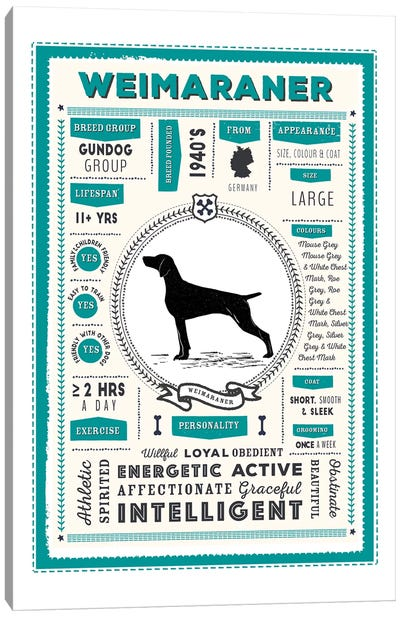 Weimaraner Infographic Blue Canvas Art Print