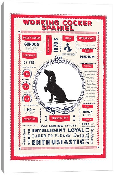 Working Cocker Spaniel Infographic Red Canvas Art Print