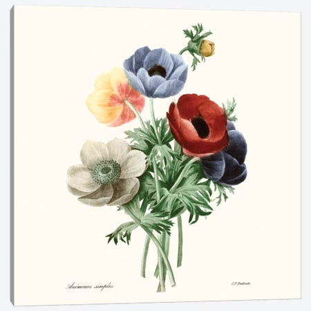 Blushing Bouquet I Canvas Print #PRE1} by Pierre-Joseph Redouté Art Print