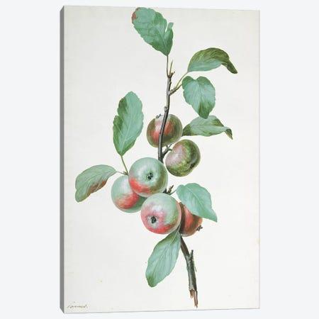 Apples  Canvas Print #PRE20} by Pierre-Joseph Redouté Canvas Artwork