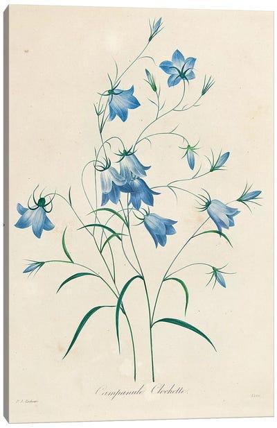 Bluebells, from 'Choix des Plus Belles Fleurs et des Plus Beaux Fruits', 1827-33  Canvas Art Print