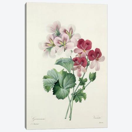 Geranium Variety  from 'Choix des Plus Belles Fleurs', 1827  Canvas Print #PRE22} by Pierre-Joseph Redouté Canvas Art