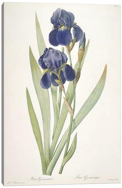 Iris germanica , 1812 Canvas Art Print