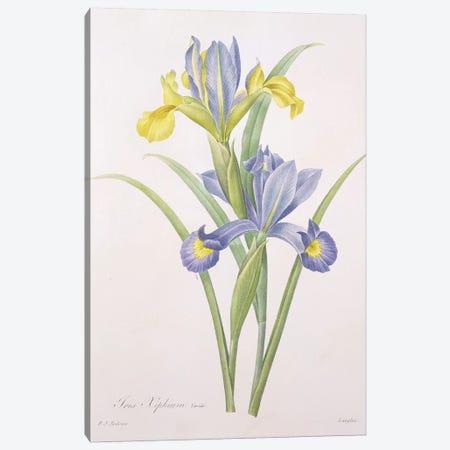 Iris xiphium, variety, engraved by Langlois, from 'Choix des Plus Belles Fleurs', 1827  Canvas Print #PRE33} by Pierre-Joseph Redouté Canvas Print