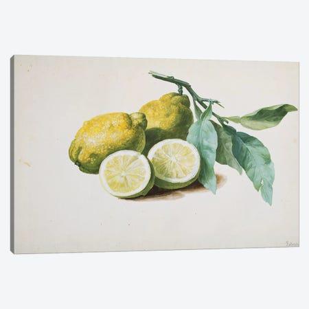 Lemons, 1840  Canvas Print #PRE35} by Pierre-Joseph Redouté Canvas Art