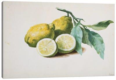 Lemons, 1840  Canvas Art Print