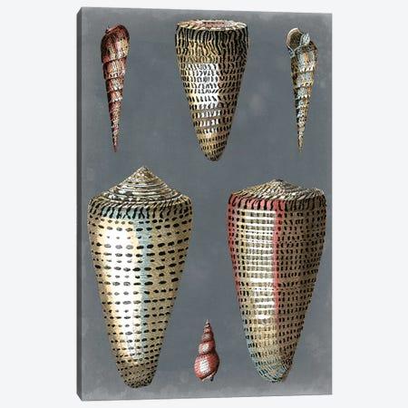 Midnight Shells I Canvas Print #PRE3} by Pierre-Joseph Redouté Art Print