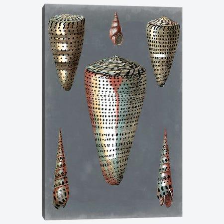 Midnight Shells II Canvas Print #PRE4} by Pierre-Joseph Redouté Canvas Art