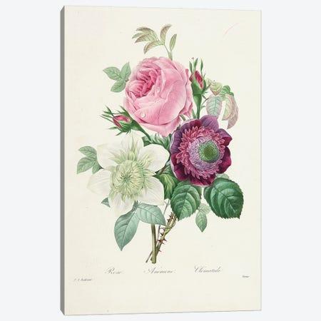 Rose, Anemone and Clematis, engraved by Victor, from 'Choix des Plus Belles Fleurs et des Plus Beaux Fruits', 1827-33  Canvas Print #PRE55} by Pierre-Joseph Redouté Canvas Art