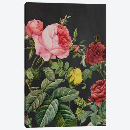 Redoute's Bouquet I Canvas Print #PRE5} by Pierre-Joseph Redouté Canvas Art