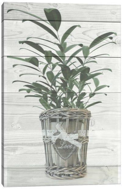 Loving Plant Canvas Art Print