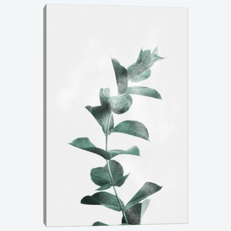 Misty Eucalyptus Canvas Print #PRM172} by Marcus Prime Canvas Art Print