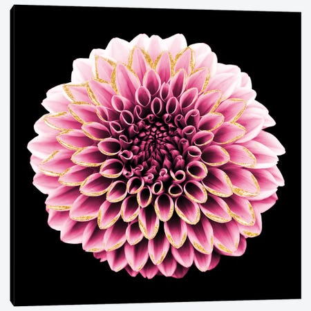 Dahlia Embrace I Canvas Print #PRM42} by Marcus Prime Canvas Art