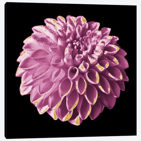 Dahlia Embrace III Canvas Print #PRM43} by Marcus Prime Canvas Wall Art