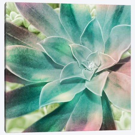 Springtime Magnifique I Canvas Print #PRM55} by Marcus Prime Canvas Wall Art